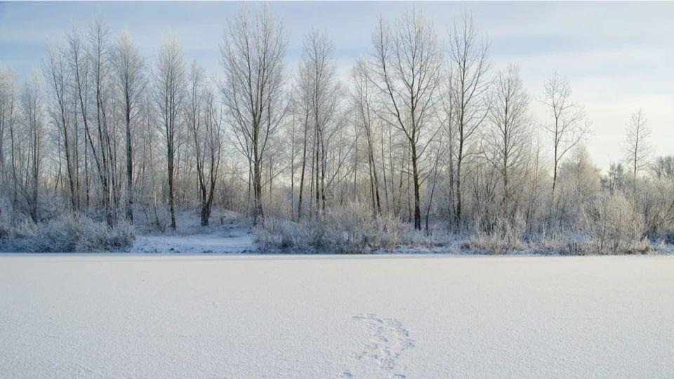 Синоптики рассказали о погоде в Алтайском крае во второй половине  ноября