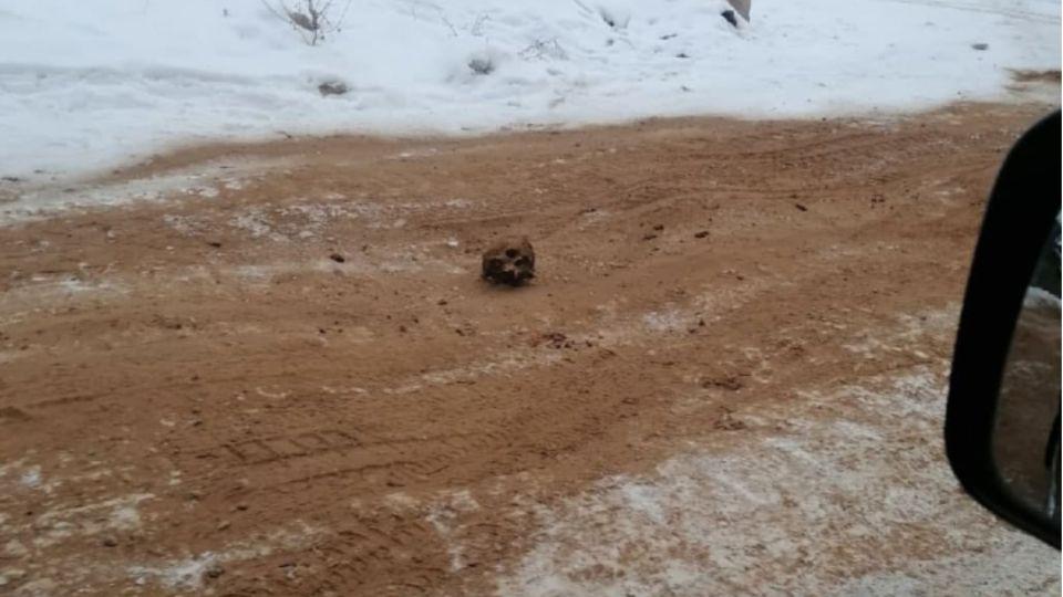 В Сибири посыпали дорогу песком с человеческими костями