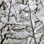 Небольшой снег и до -15 градусов ожидается 17 ноября в Алтайском крае