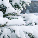 Мороз до -18 градусов будет 19 ноября в Алтайском крае