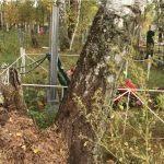 Барнаульцы умоляют спилить ветхие деревья на Черницком кладбище