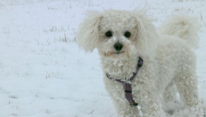 В Барнауле девушка заявила в полицию на мать за продажу собаки