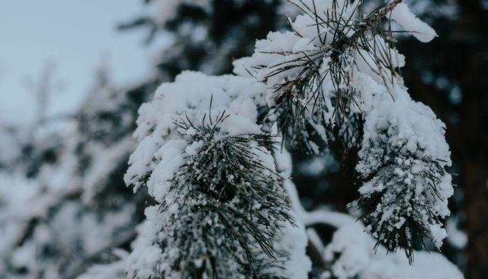 Роспотребнадзор: зимой коронавирус никуда не исчезнет