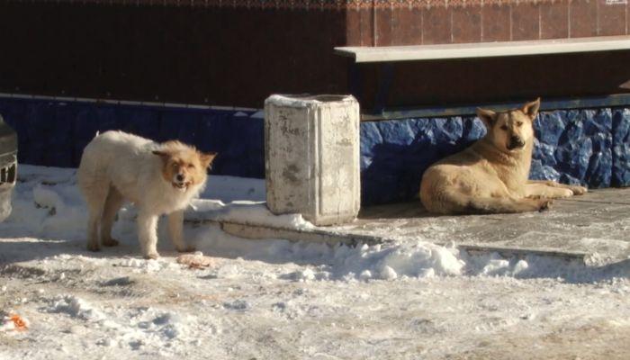 Еле отбилась: кто должен отлавливать бродячих собак и сколько их в Барнауле