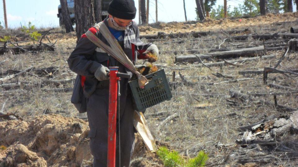 Алтайский край вошел в топ-5 регионов по высаженным деревьям