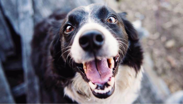 Девочка умерла после укуса зараженной бешенством собаки, которую она приютила