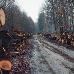 Топ-менеджера одного из предприятий на Алтае задержали по делу о рубках леса