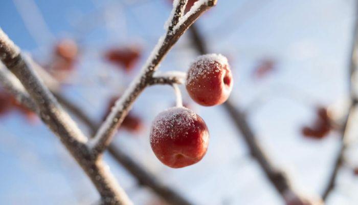 Синоптики рассказали, какая погода будет в декабре в Алтайском крае