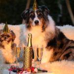 Эксперты рассказали, в чем встречать Новый год – 2021