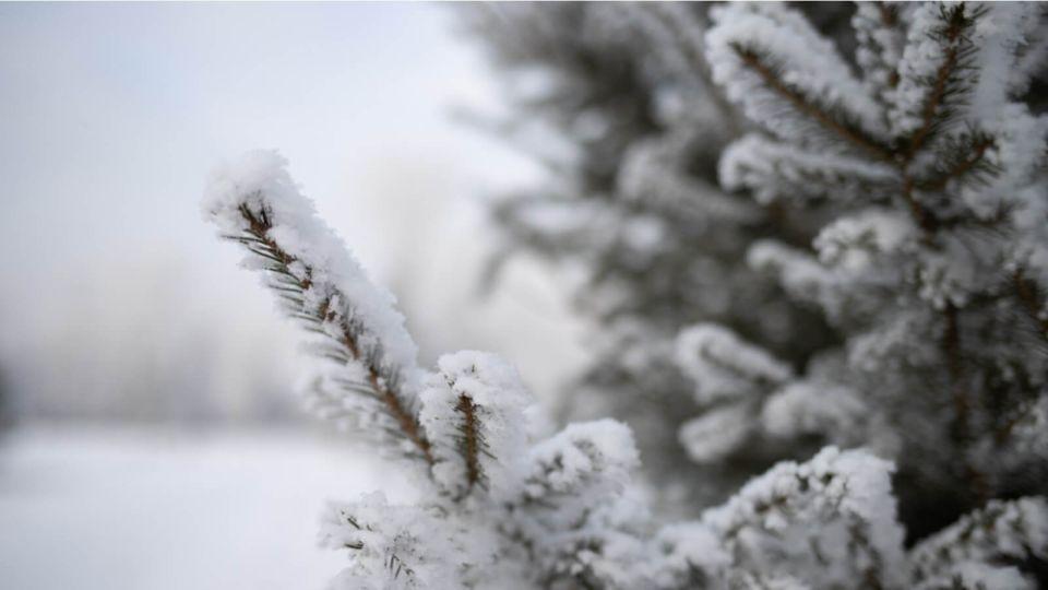 Мороз под -30 ударит в ночь на 4 декабря в Алтайском крае