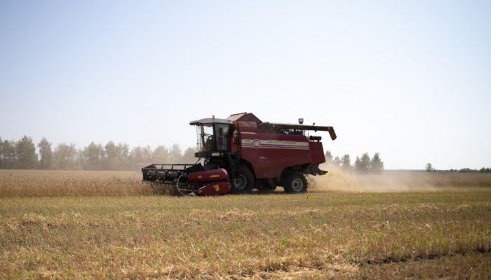 Прямой убыток алтайских аграриев от засухи превысил 600 млн рублей
