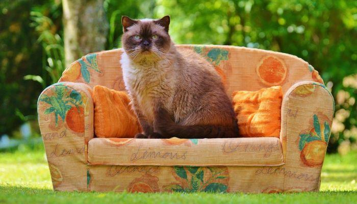 Мягкая и корпусная мебель взлетела в цене на Алтае и продолжит дорожать