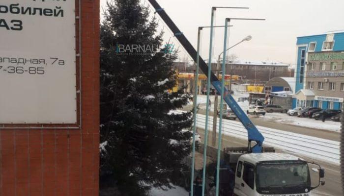 Барнаульцы возмущаются, что под Новый год в городе пилят отличные ёлки