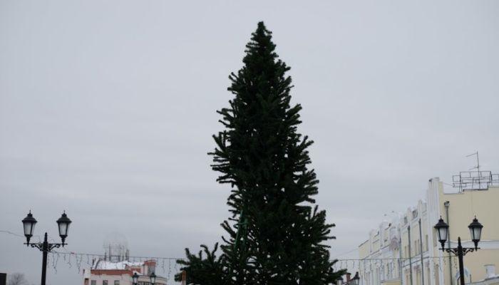 В России с 1 января заработают новые правила установки елки