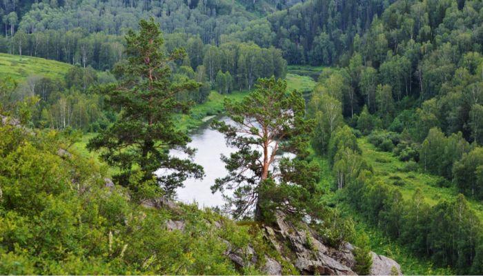 Что дает нацпроект Экология алтайским лесам и сохранению природного богатства