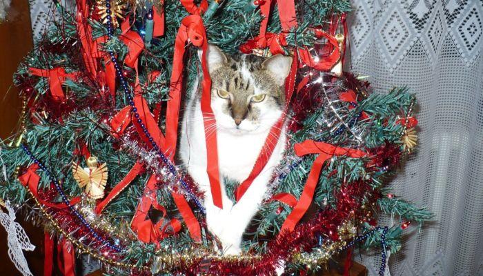 Елка vs кот: как защитить символ Нового года от домашнего питомца