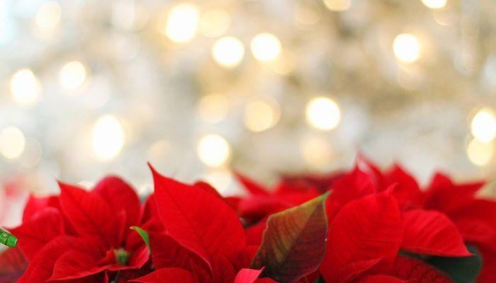 Кто и как отмечает Рождество 25 декабря и что нужно сделать в этот день