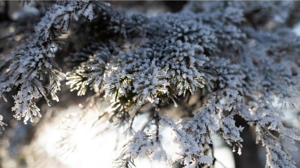 Мороз до -34 градусов и северный ветер ожидаются в Алтайском крае 26 декабря