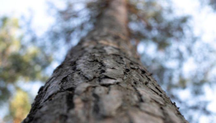 Водоканал готов заплатить за снос деревьев в Барнауле 375 тыс. рублей