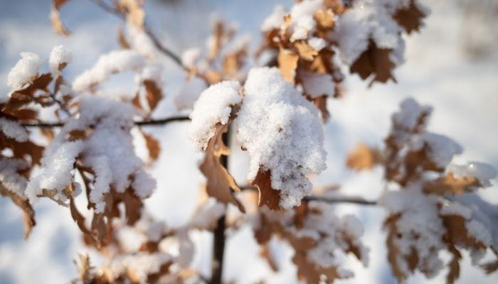 Франк ввел режим повышенной готовности в Барнауле из-за лютых морозов