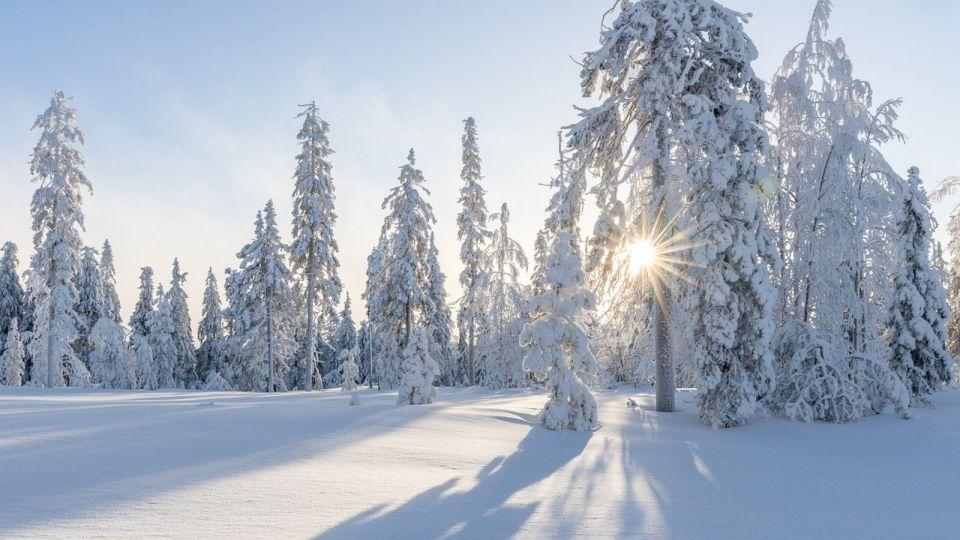 Белый плен: когда закончатся 40-градусные морозы в Алтайском крае