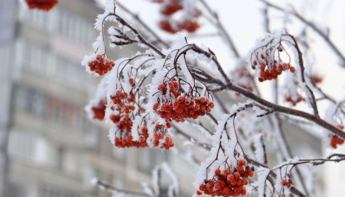 Жители Алтайского края рассказывают о морозных рекордах субботы