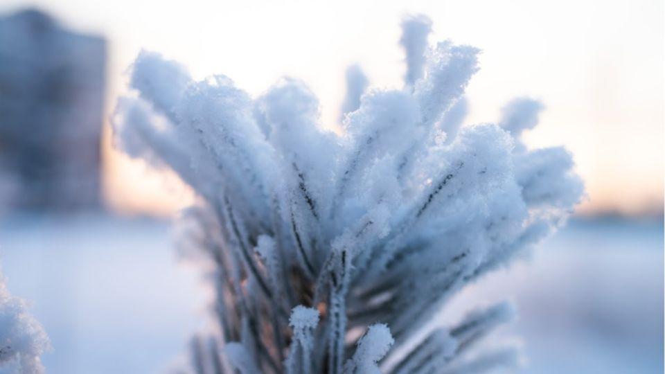 Аномальные холода продержатся на Алтае почти все новогодние праздники
