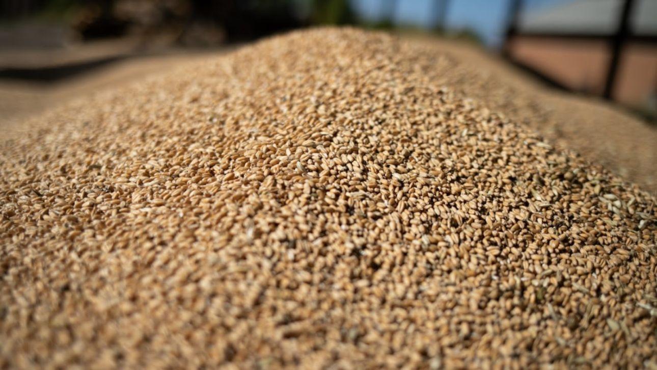 Мукомолам выделили денег из бюджета из-за высоких цен на зерно