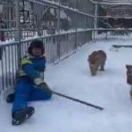Барнаульский зоопарк зовет на прогулку с детенышами хищников