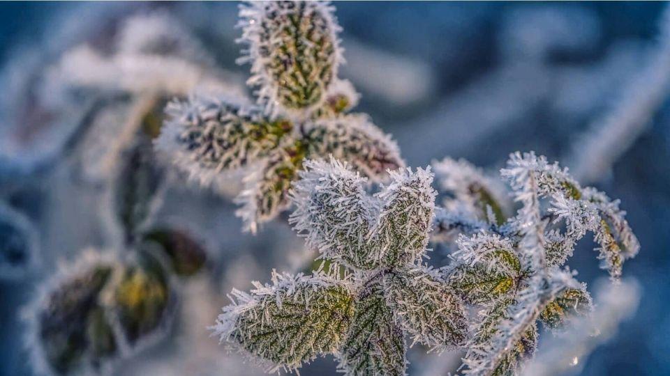 Штормовое предупреждение: в Алтайском крае сохранится аномально холодная погода
