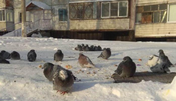 Мороз крепчает. В Алтайском крае сохранится аномальная погода