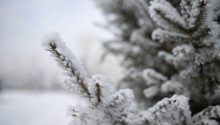 Резкое потепление и метели накроют Алтайский край 11 января