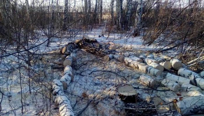 Вырубки на месте возможного заказника в Алтайском крае на время прекратили