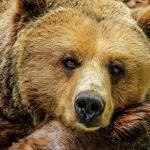 Кто такой святой Серафим Саровский и правда ли, что он дружил с медведем