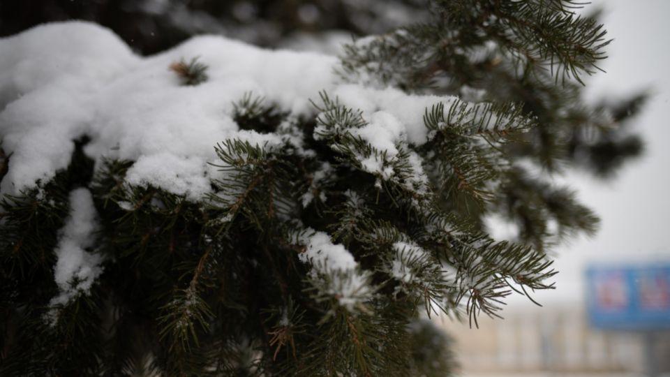 Морозы под -40 градусов вернутся в Алтайский край