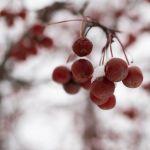 Холодный ветер и лёгкий мороз ожидаются 20 января в Алтайском крае