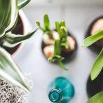 Что такое растения-барометры и какие цветы, травы и деревья к ним относятся