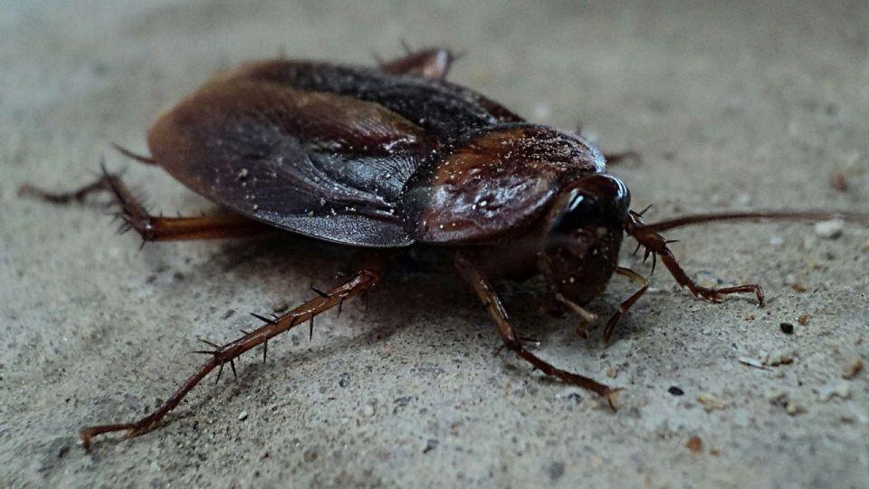 В Роспотребнадзоре рассказали, когда россиян ждет нашествие тараканов