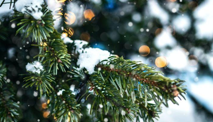 Запоздавшим барнаульцам предлагают сдать новогодние елки на выходных