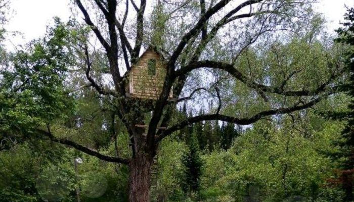 Усадьбу с деревянным домиком на дереве сдают в аренду в Алтайском крае