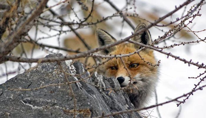 Семь случаев бешенства у животных выявили за год в Алтайском крае