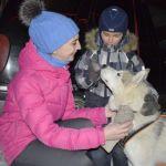 Ночная гонка на собачьих упряжках в Барнауле собрала 300 зрителей