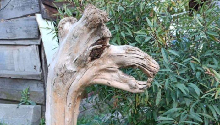 В Москве за 3 млн рублей продают корягу с Алтая в виде верблюда