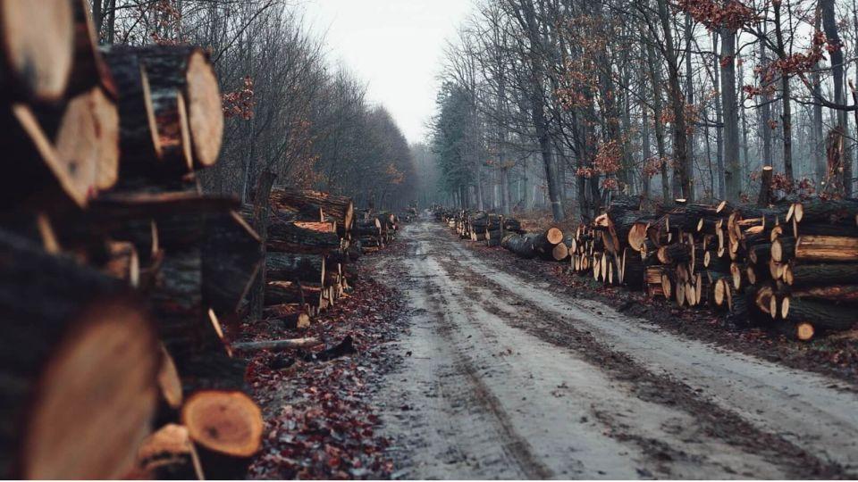 """""""Полное безобразие"""": губернатора попросили спасти завод """"Алтай-Форест"""""""