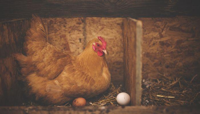 Яйца и мясо птицы могут подорожать на прилавках российских магазинов