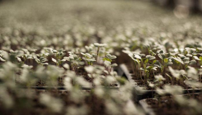 Как покупать семена в интернет-магазине и с какими проблемами можно столкнуться