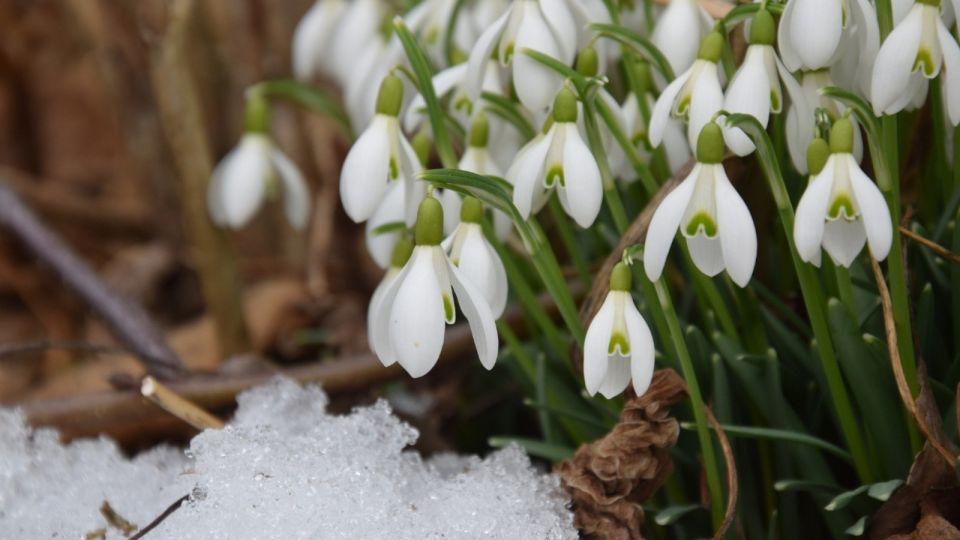 Весна. Природа. Подснежники
