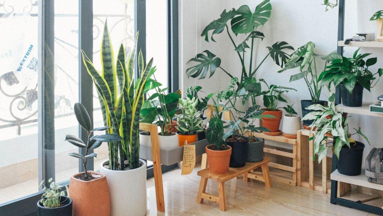 Вместо роз и тюльпанов: барнаульцы раскупают комнатные растения к концу зимы