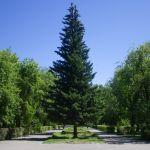 Мэрия Барнаула выделит почти 2 млн рублей на концепцию озеленения города