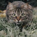 Когда День кошки в России и как его правильно отметить